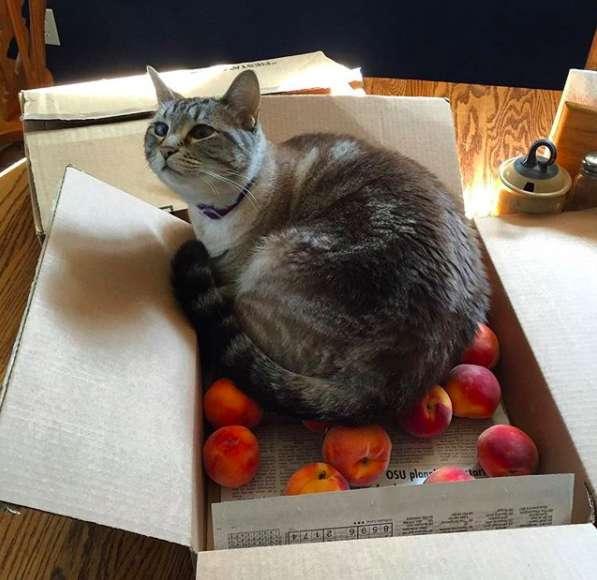 桃に乗る猫