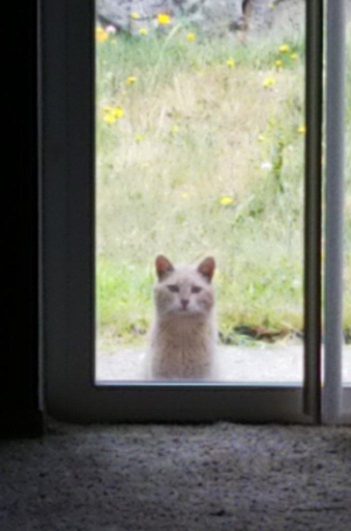 中を覗く猫