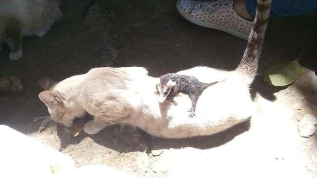 猫の背中にオポッサム