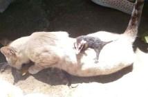 オポッサムと猫