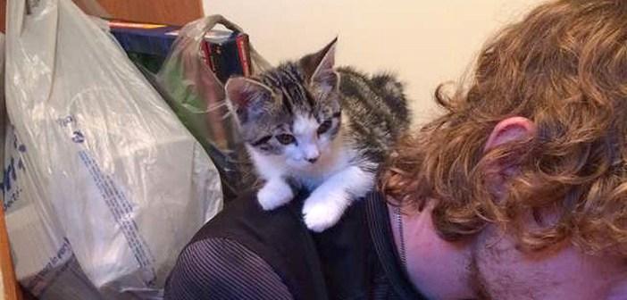 猫に無関心だったため、保護子猫を引き取ることを拒否した男性。でも子猫の方は別の計画を持っていました ( *´艸`)