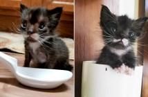 スプーンくらいの大きさだった子猫