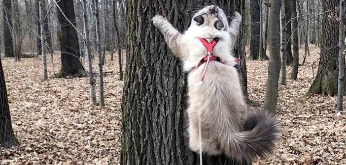 1本の木を目掛けて、猫さんが猛然とダッシュ! 物凄い勢いでビタッとへばりつく姿に目を奪われる (ㆁωㆁ)!