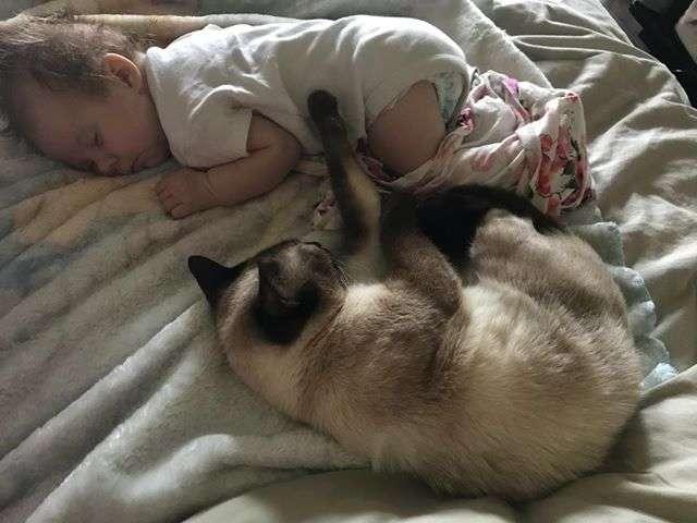 赤ちゃんと一緒に寝る猫