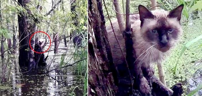 沼で助けを求める猫