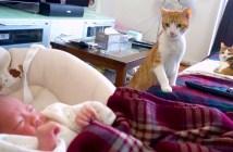 赤ちゃんにドキドキする猫