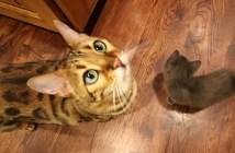 初めて出会った猫と子猫