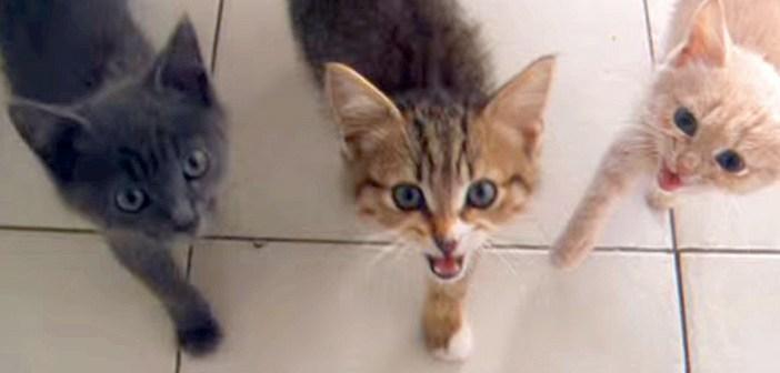 お腹が空いた子猫