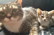 一緒の親子猫