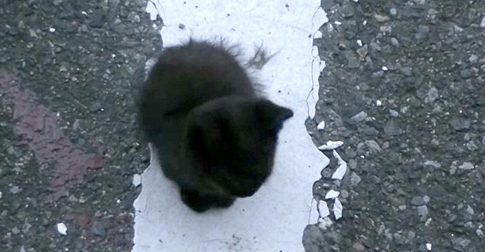 駐車場で保護された子猫