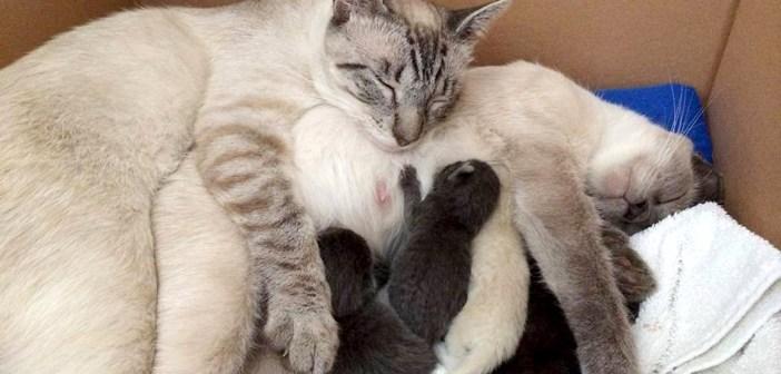 一度は離ればなれになった猫の夫婦。引き取られた先で再会すると、幸せいっぱいの姿を見せてくれた (*´ェ`*)