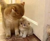 大好きなお母さんにピッタリと寄り添う子猫。どうしてもお母さんを独り占めしたかったようで、可愛い行動に出た ( *´艸`)