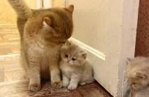 ピタッとくっつく子猫