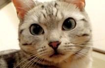 病気を心配する猫