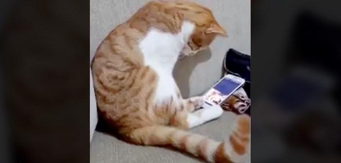 飼い主さんを失った猫
