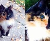 まん丸の瞳を持つ盲目の猫。路上を彷徨っていたところを保護されて、新しい家に迎えられると、とっても嬉しい変化が!