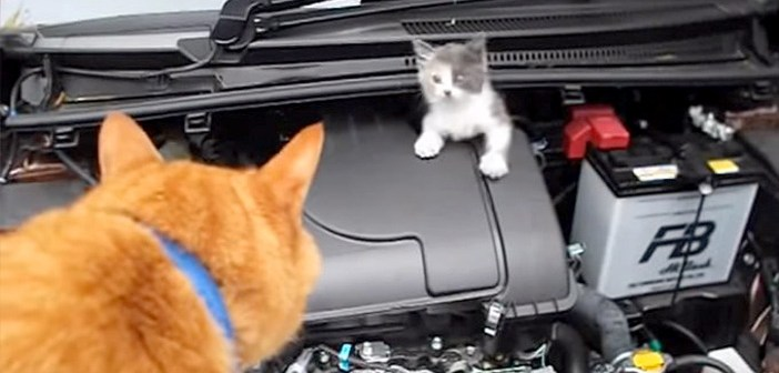エンジンルームに入り込んだ子猫