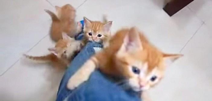 足をよじ登ってくる子猫達