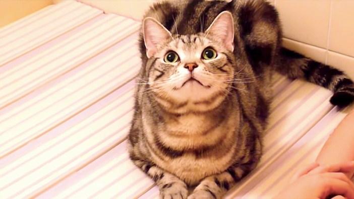 お風呂の蓋に座る猫
