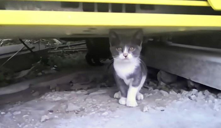 自動販売機の下の子猫