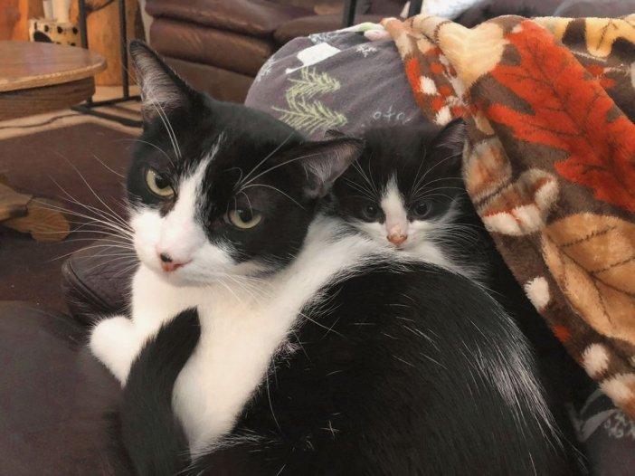 猫に寄り添う子猫