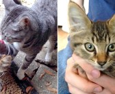 散歩に出かけた愛猫が、野良の子猫を連れ帰ってきた! そのまま一緒に暮らし始めると、毎日が驚くほど幸せいっぱいに♪
