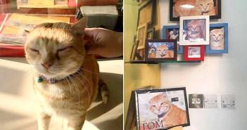 印刷屋さんの猫