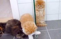 子猫とオモチャ