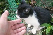 裏山から出てきた子猫