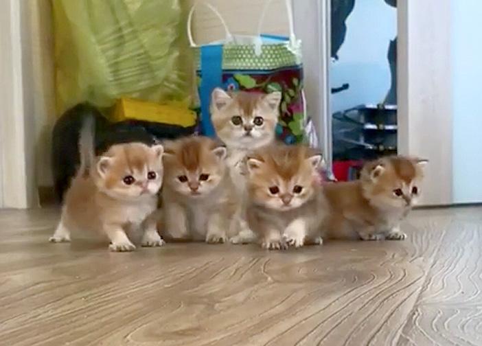 座る子猫達