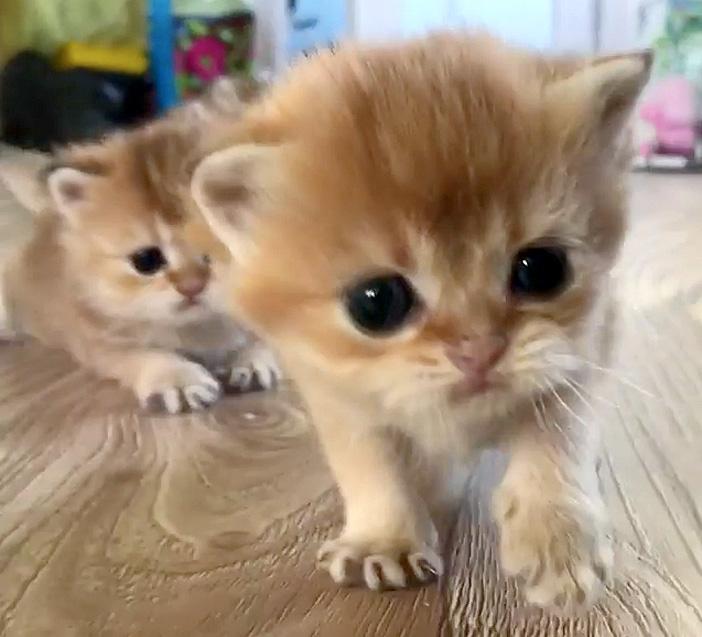 近づいてくる子猫達