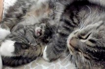 4日後に生まれた子猫