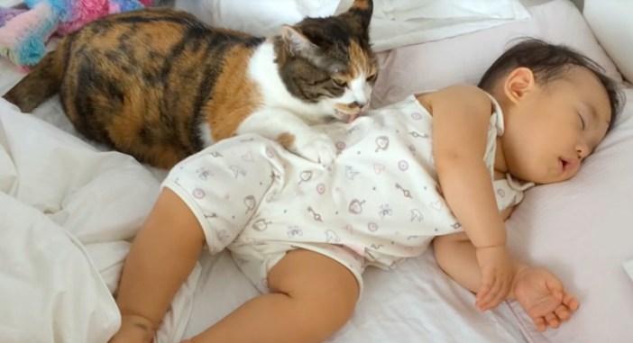 赤ちゃんを毛づくろいする猫