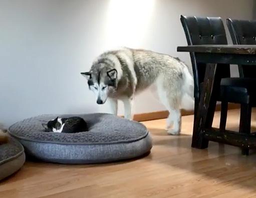 猫にベッドを取られた犬