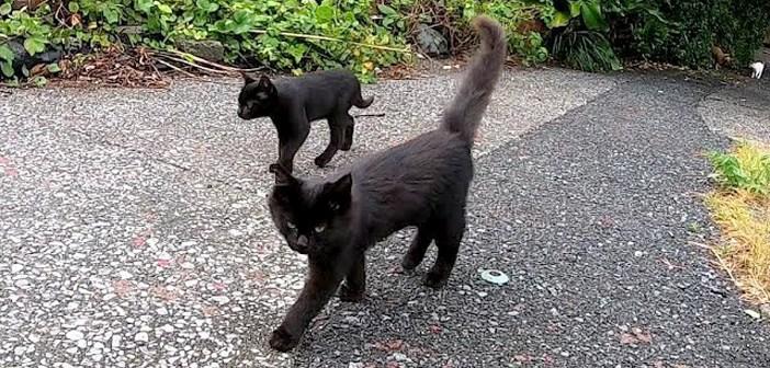 ついてくる黒猫子猫