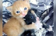 仲良しな子猫兄弟