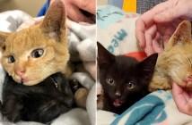山火事から保護された子猫達