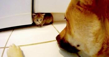生まれてすぐに取り残され、母親の愛情を知らなかった子猫。温かく迎えてくれたのは、同じ境遇の大きなお兄さんでした