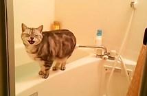 お風呂の猫