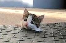 ヒョッコリ子猫