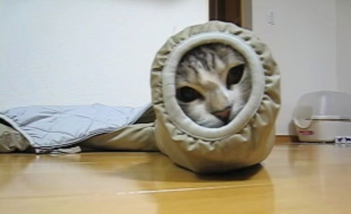 イモムシな猫さん