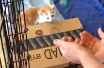ジャンプ子猫