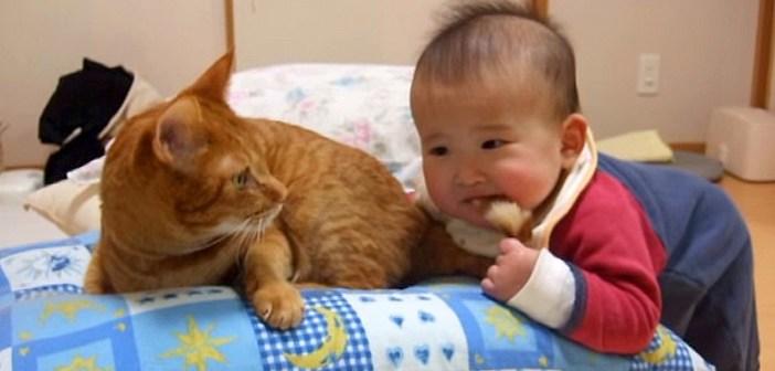 赤ちゃんにシッポを噛まれた猫