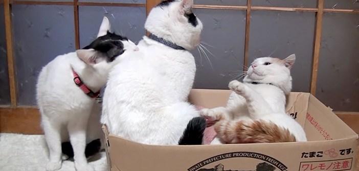 喧嘩を止める猫