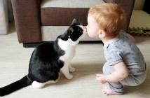キスする赤ちゃんと猫