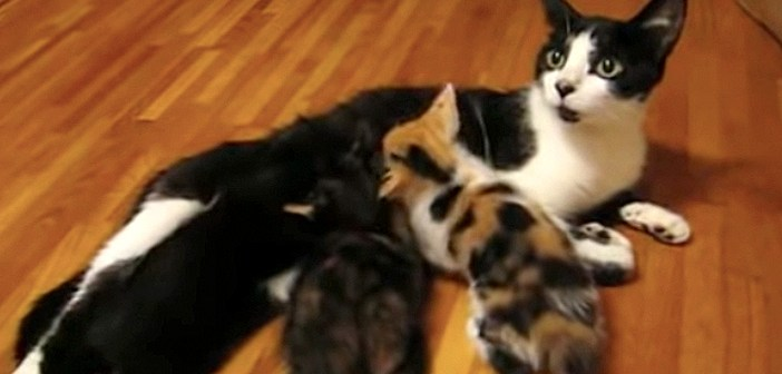 授乳中に「ハッ!」と何かを思い出し、突然移動を始めた母猫。その後に続く子猫達の姿がとっても可愛かった ( *´艸`)♡