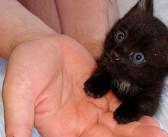 ドラキュラ城の近くで黒猫を発見! 旅行中の男性が危ないところを助けてあげると、とっても素敵な恩返しが (*´ω`*)