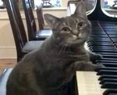 音楽教室で育ち、いつの間にかピアノが大好きになった猫さん。夢中でピアノを弾き続ける姿がとっても可愛かった♡