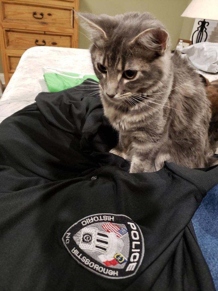 服に乗る猫