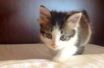 シッポを怪我した子猫